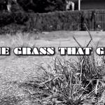 ShredTVT & Joe Stu f. Tommy Nova – Grass That Grew
